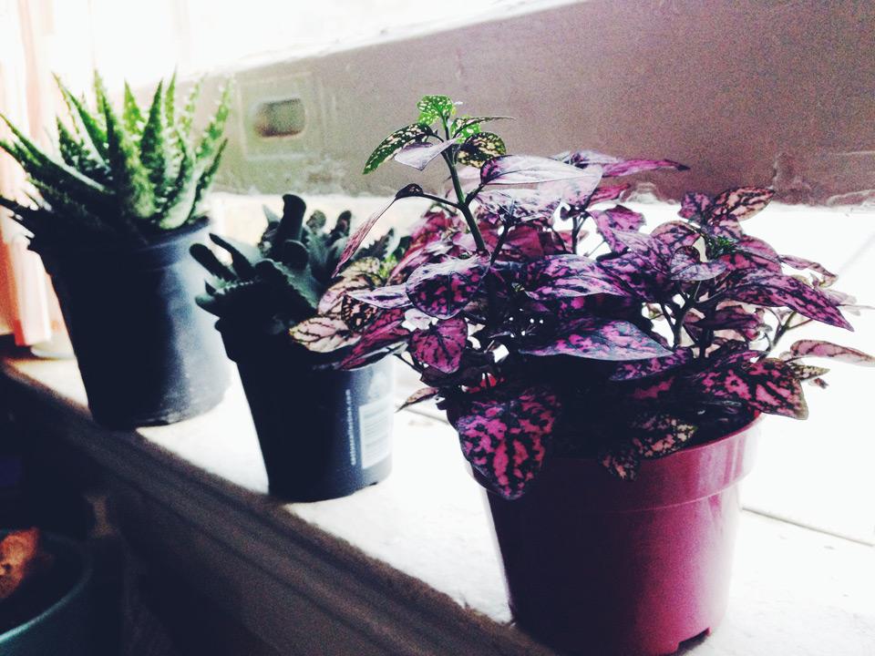 BW_plants01