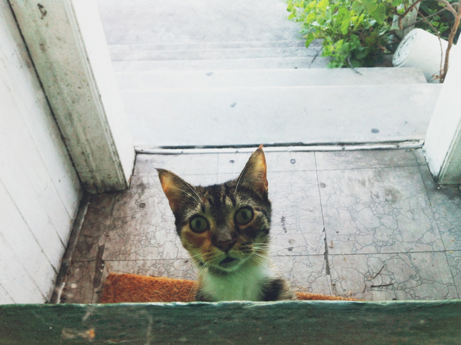 Another Day, AnotherStray